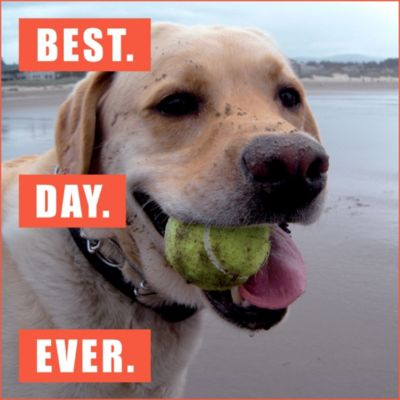 Best Day Ever Loldogs Magnet
