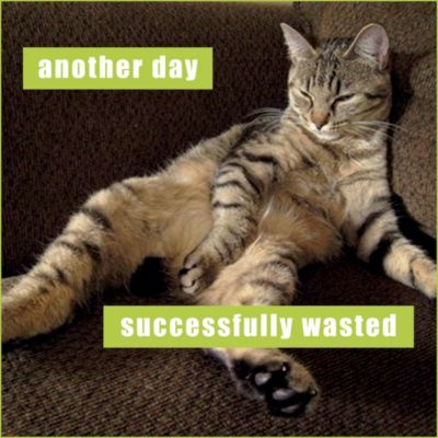 Successfully Wasted Lolcats Magnet