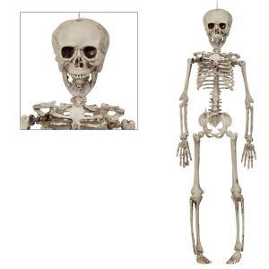 Plastic Skeleton