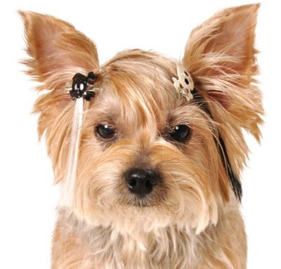 Glitter Skull Dog Hair Extensions 3ct
