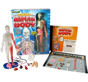 Squishy Human Body Science Kit 29pc
