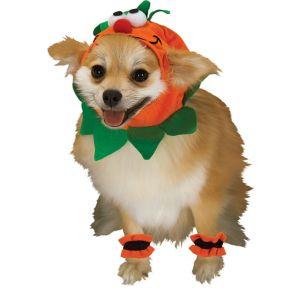 Mini Pumpkin Dog Costume