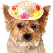Flower Straw Dog Hat