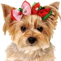 Christmas Dog Hair Bows 2pc