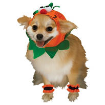 Mini Pumpkin Dog Costume