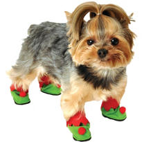 Little Elf Dog Shoes