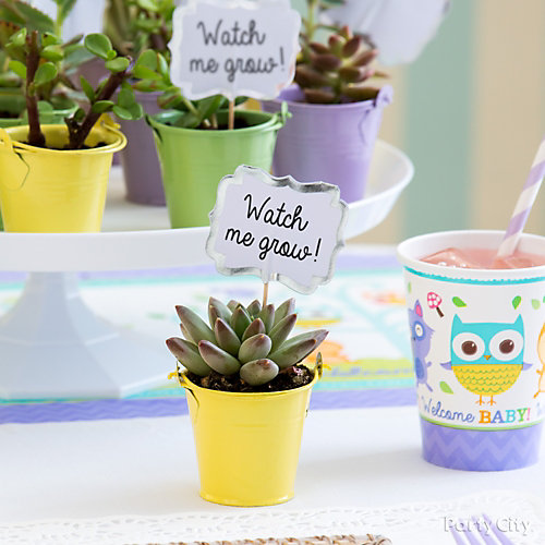 Succulent Favor Pail Idea
